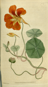 Flashing flowers
